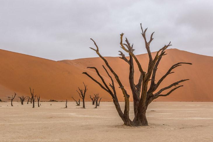 Намібія.  Мертве болото