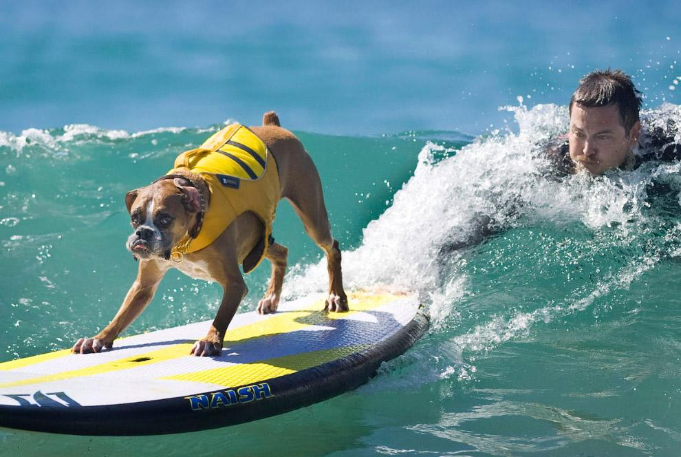 Во время соревнований у собак и их хозяев даже одинаковые выражения лиц и морд