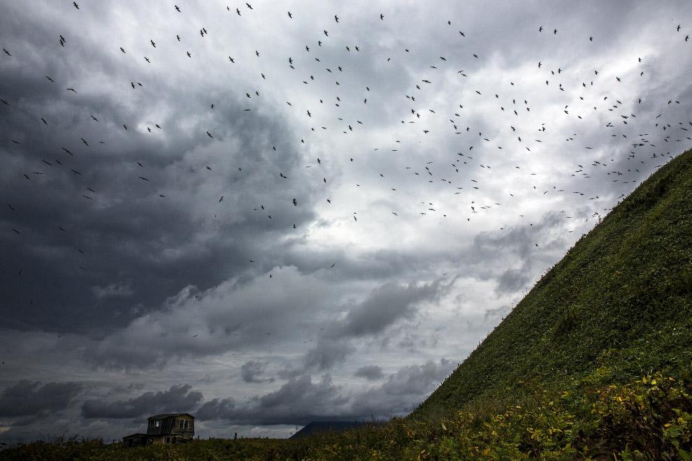 Чайки и заброшенный дом на Кунашире