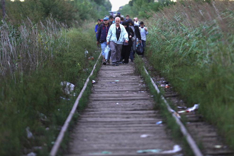 Сотни мигрантов и беженцев пересекают границу Сербии с Венгрией по железнодорожным путям