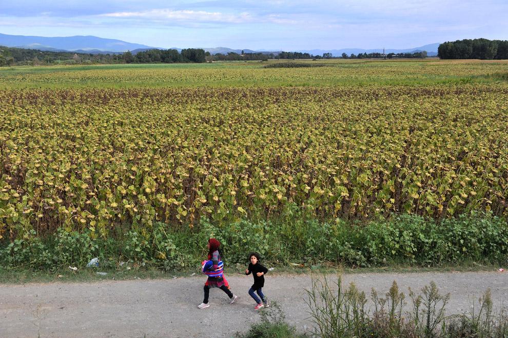 В полях недалеко от греко-македонской границы
