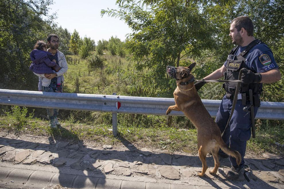 Мигрант и полицейский с собакой, Венгрия