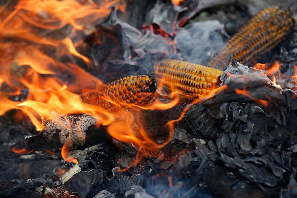 Мигранты жарят кукурузу на границе с Венгрией