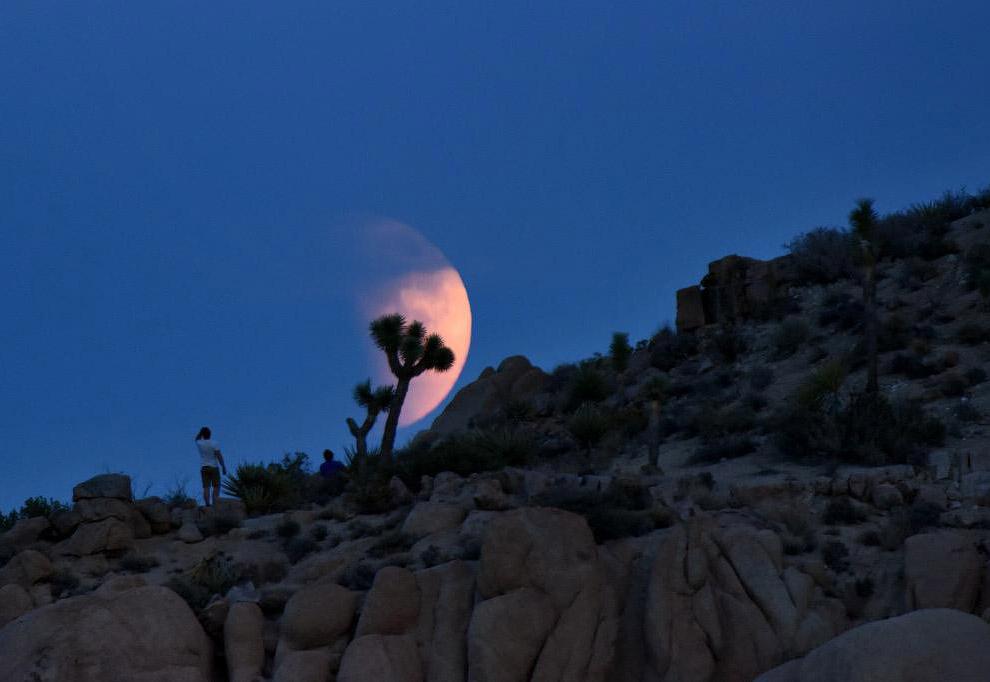 Кровавая Луна в Национальном парке Джошуа-Три, США