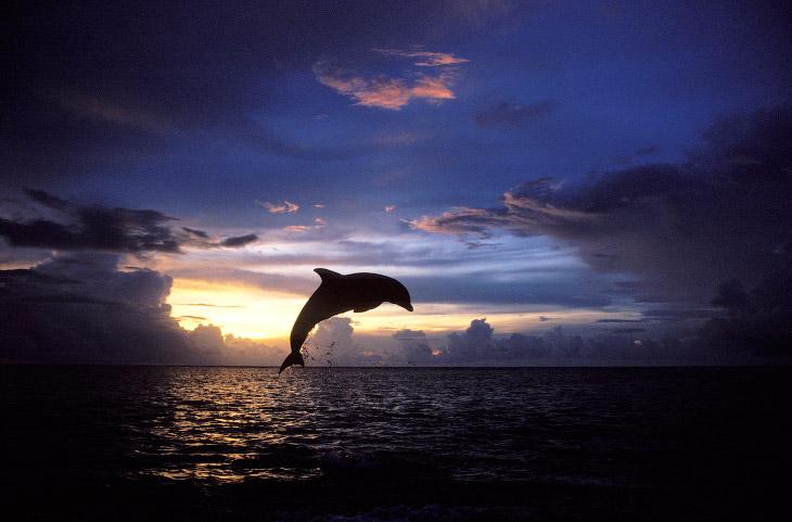 дельфин на Карибах