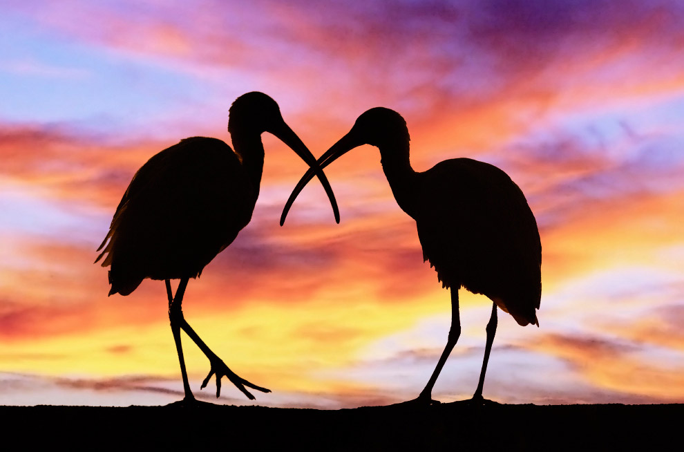 Две птицы во Флориде