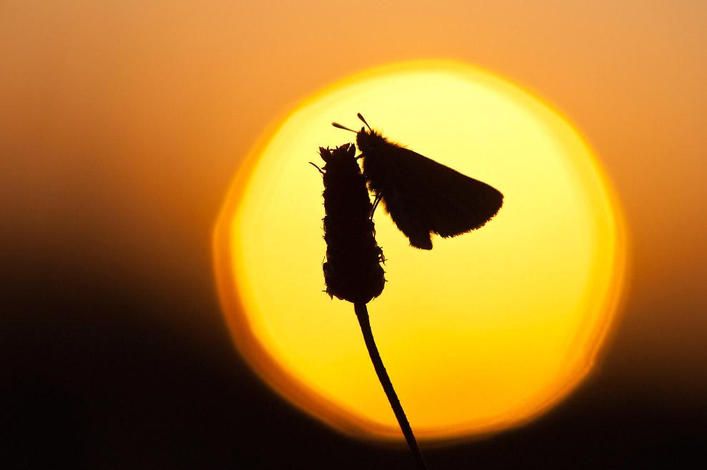 Силуэт бабочки, Нидерланды.