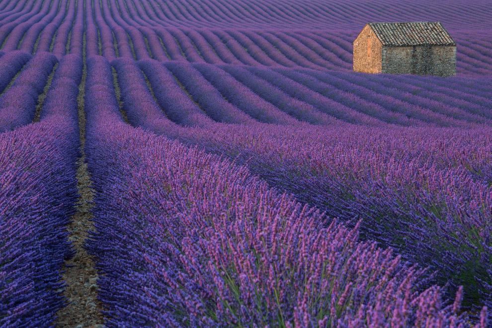 Лавандовые поля на плато Валенсоль, Франция