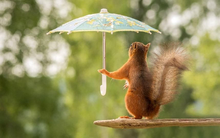Укрылся от дождя