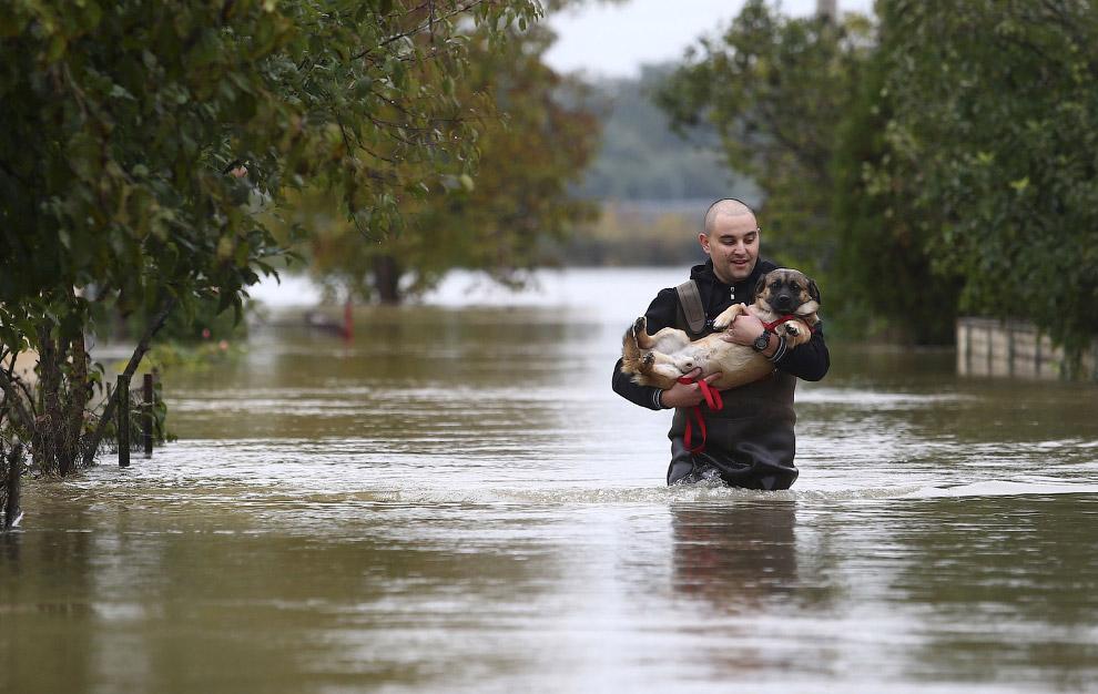 Спасатель несет собаку по через затопленные улицы Карловаце, Хорватия