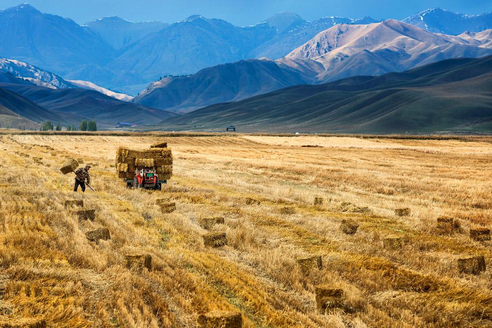Уборка урожая в Китае