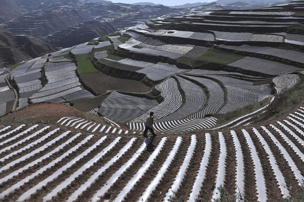 Сельскохозяйственные террасы