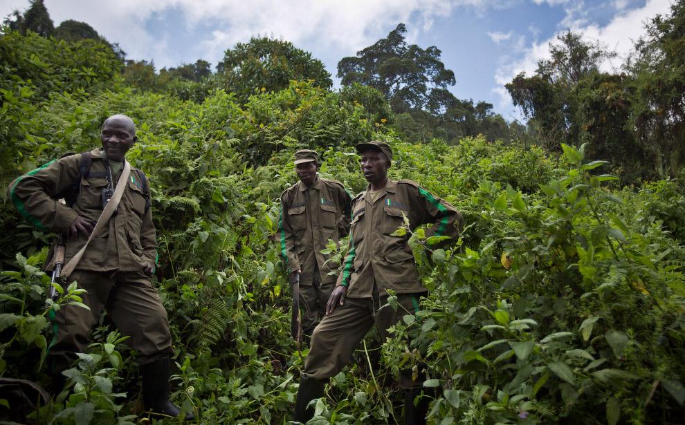 Рейнджеры, охраняющие горных горилл