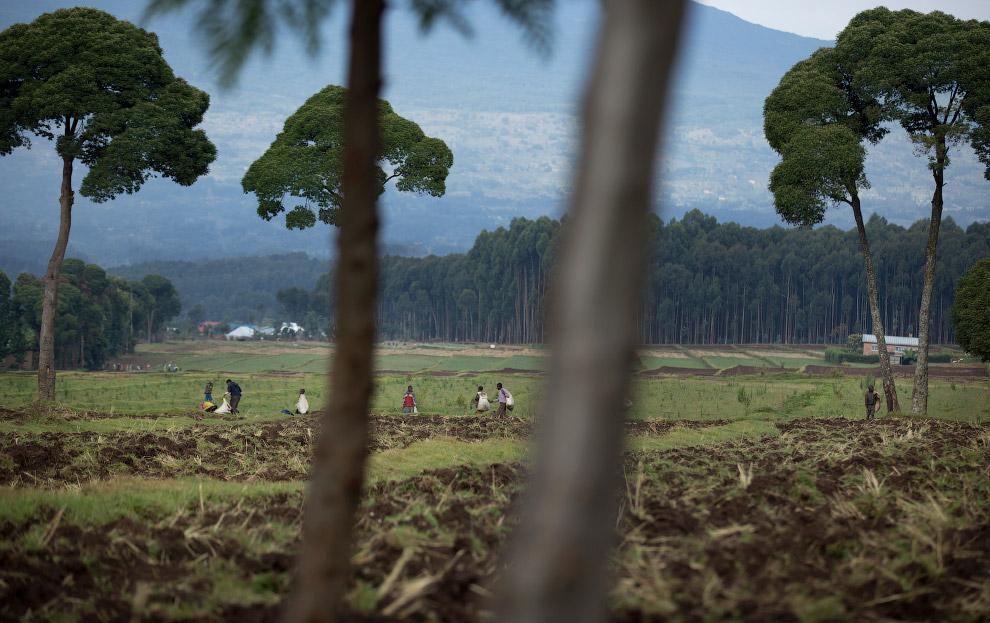 Неподалеку от Национального парка Вулканов работают местные фермеры