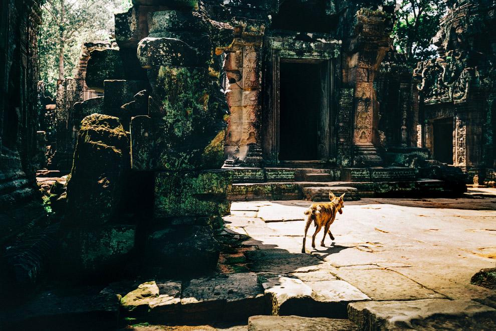 Местный житель заброшенных храмов Камбоджи
