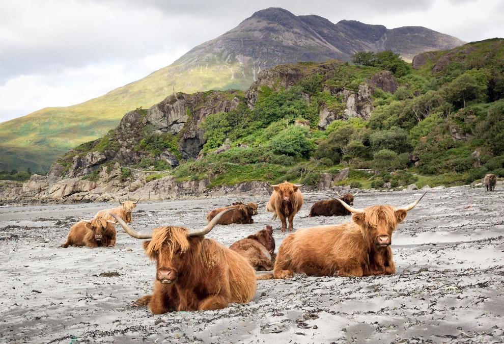 Групповое фото из Шотландии