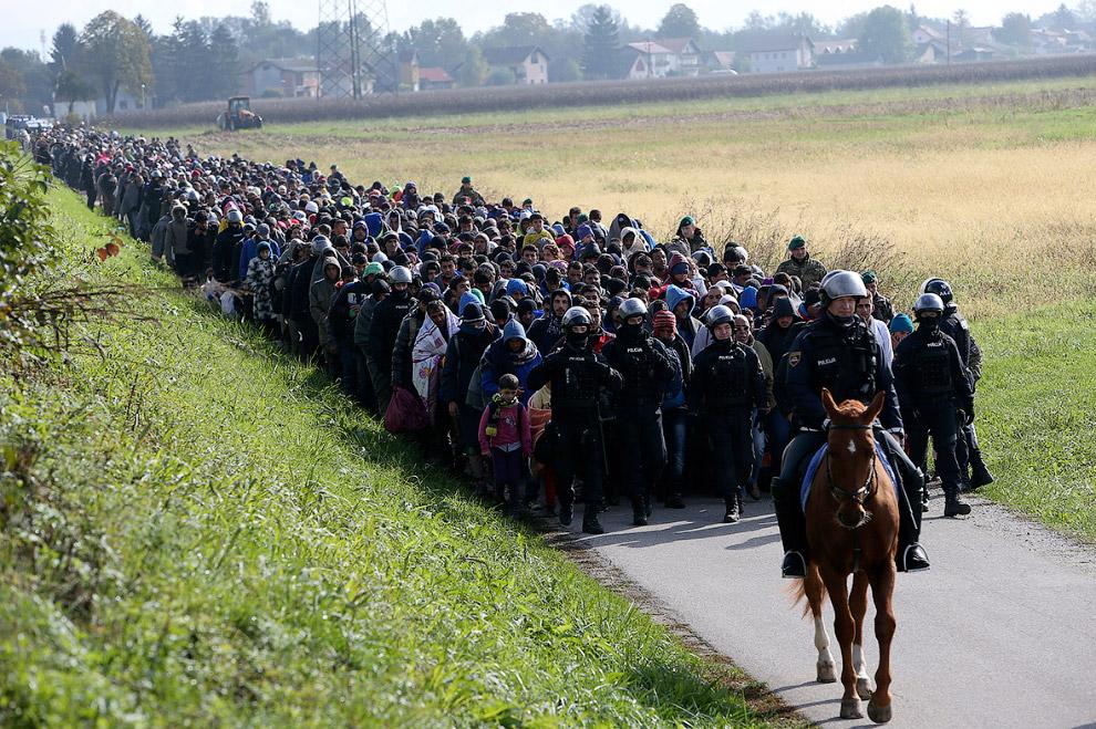 Сербия, Хорватия и Словения борются с реками мигрантов