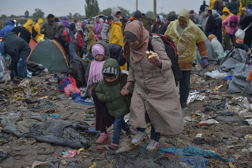 Будущие жители Европы пока границе между Сербией и Хорватией