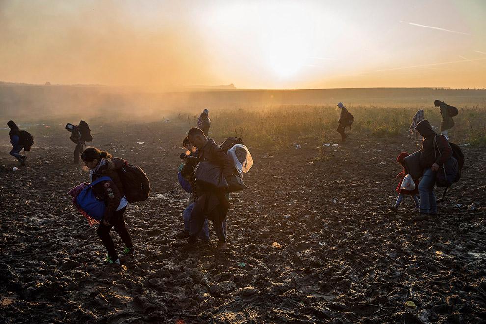 Мигранты со своими вещами идут полями по Сербии