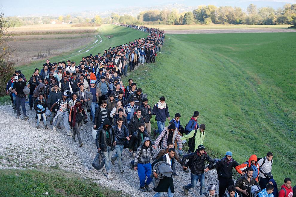 Мигранты стройною толпой идут в Словению