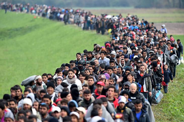 Мигранты стройною толпой