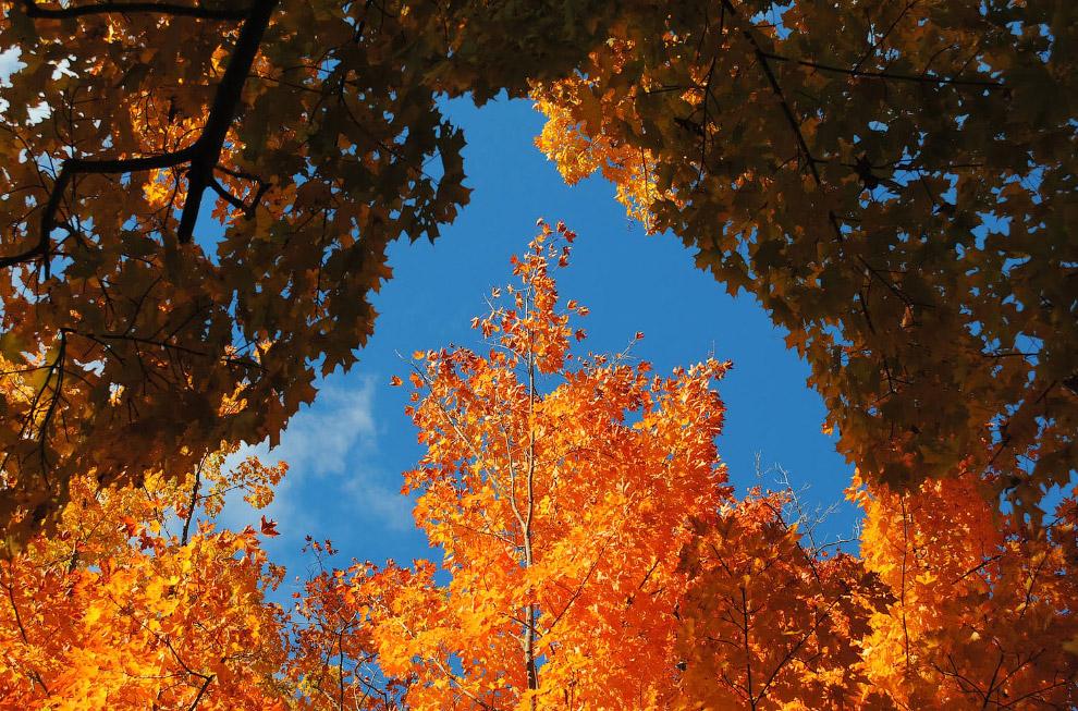 Пожелтевшие деревья, штат Массачусетс