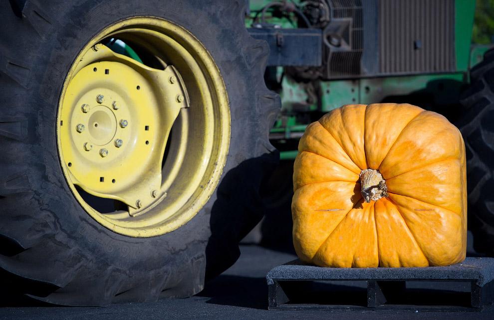 Осень — сезон урожаев и фестивалей