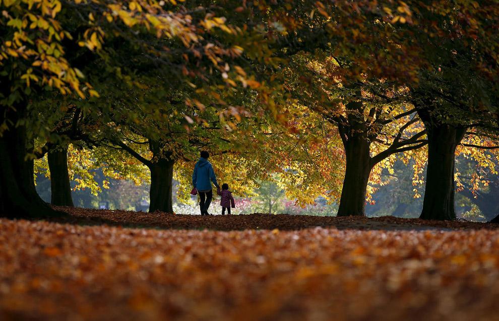 Осенний парк в Ливерпуле, Англия