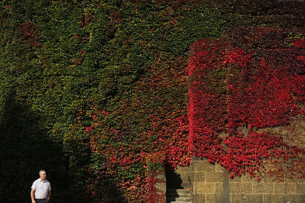 Разноцветная листва на стене здания в Англии