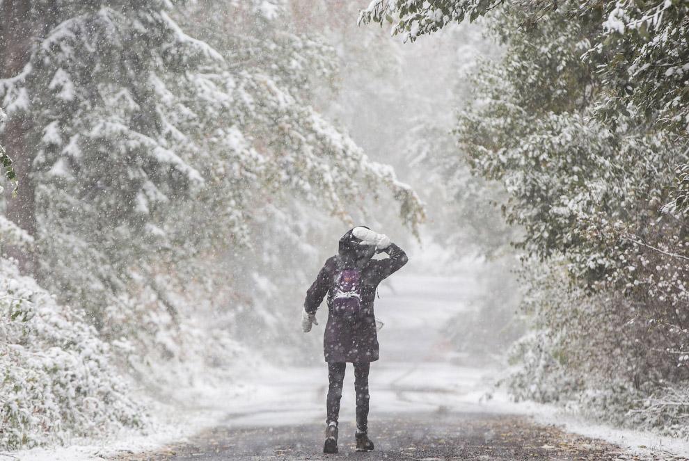 Снегопад недалеко от Франкфурта-на-Майне, Германия