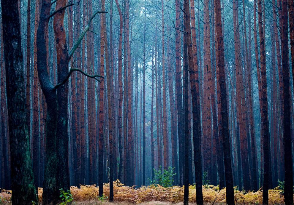 Загадочный осенний лес