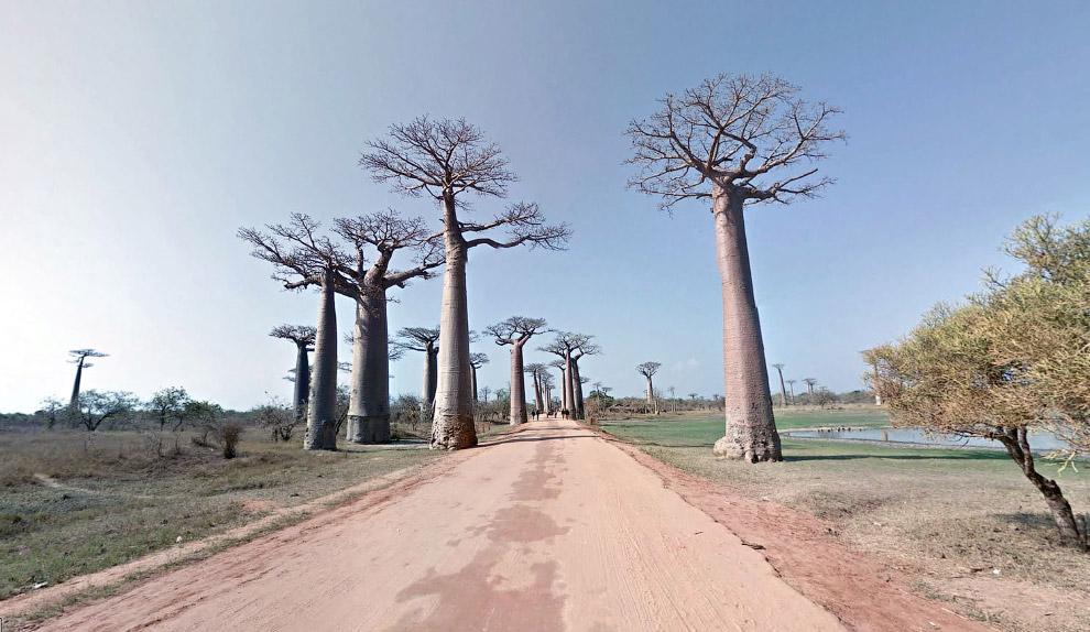 Дорога баобабов на Мадагаскаре