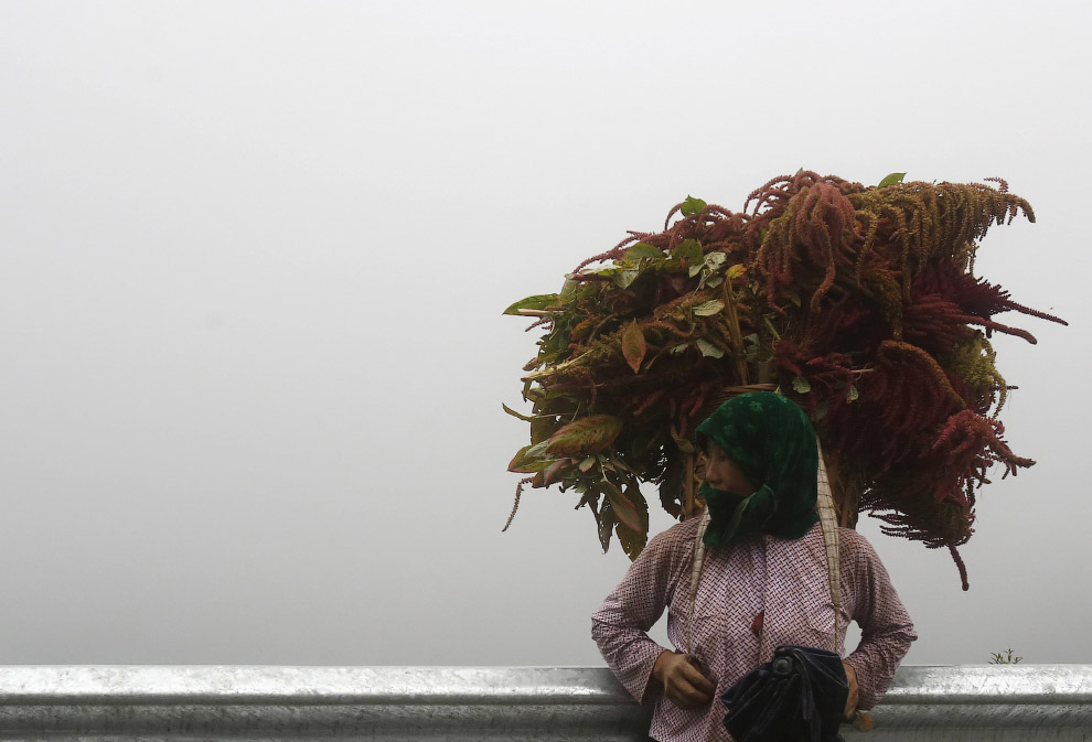 VIETNAM-AGRICULTURE/