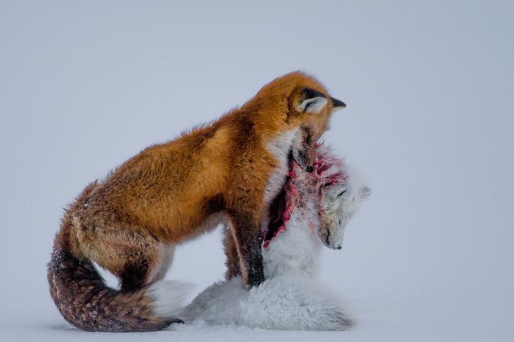 Победители Конкурса фотографий дикой природы 2015