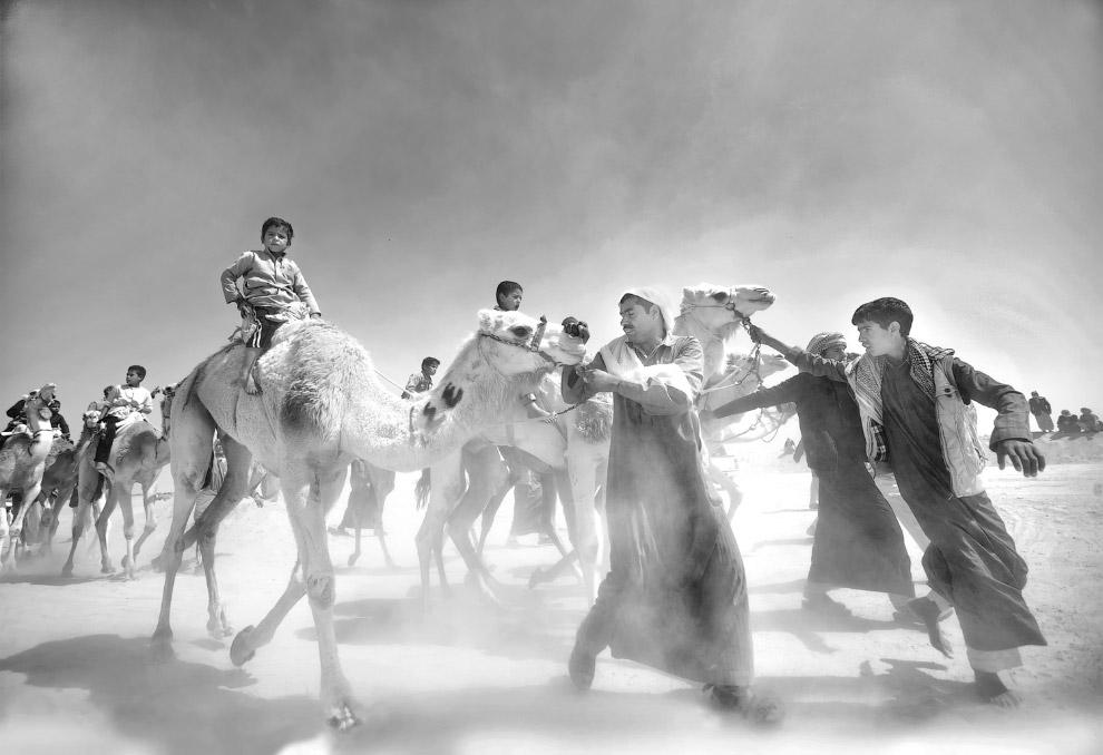 Продавцы верблюдов на рынке в Египте