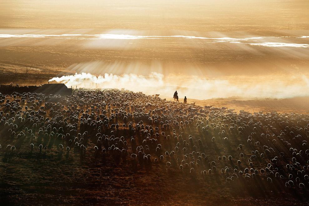 Китайские пастухи
