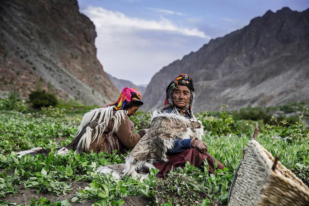 Женщины выращивают овощи на продажу на севере Индии