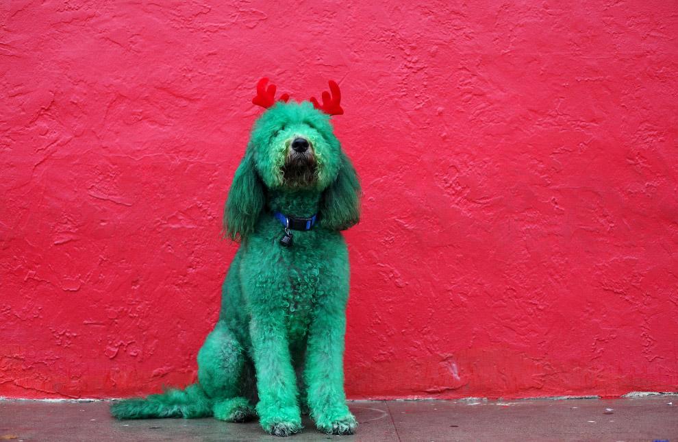 Хозяева разукрасили собаку и приделали ей рога для праздника Дня благодарения в штате Техас