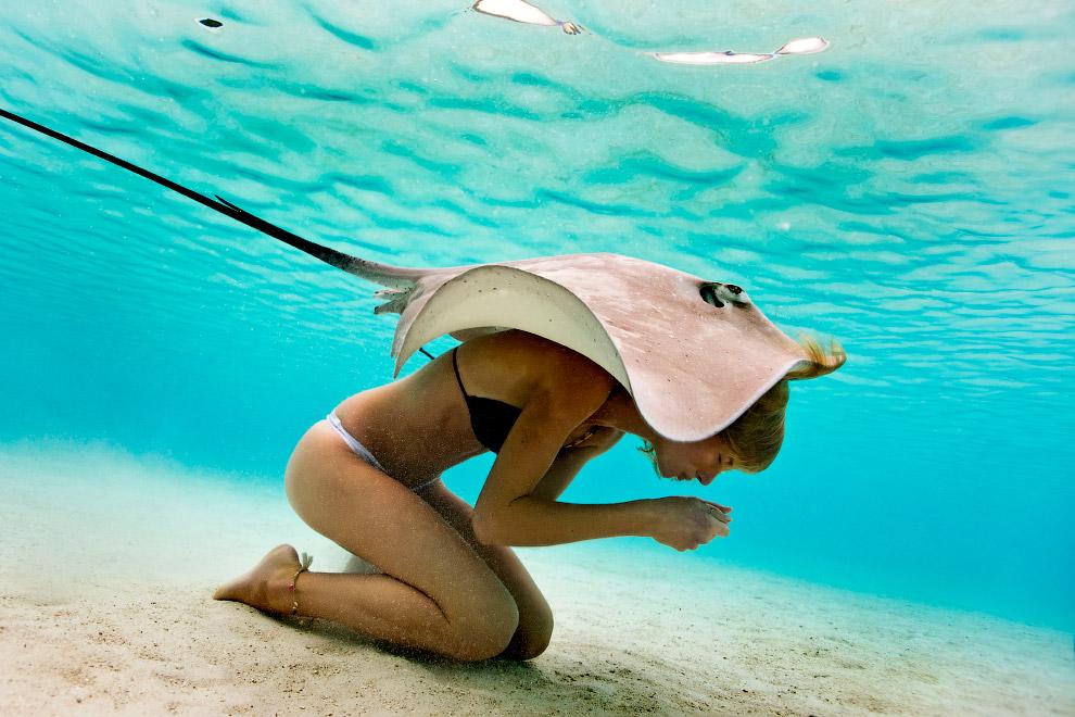 Скат у побережья Таити
