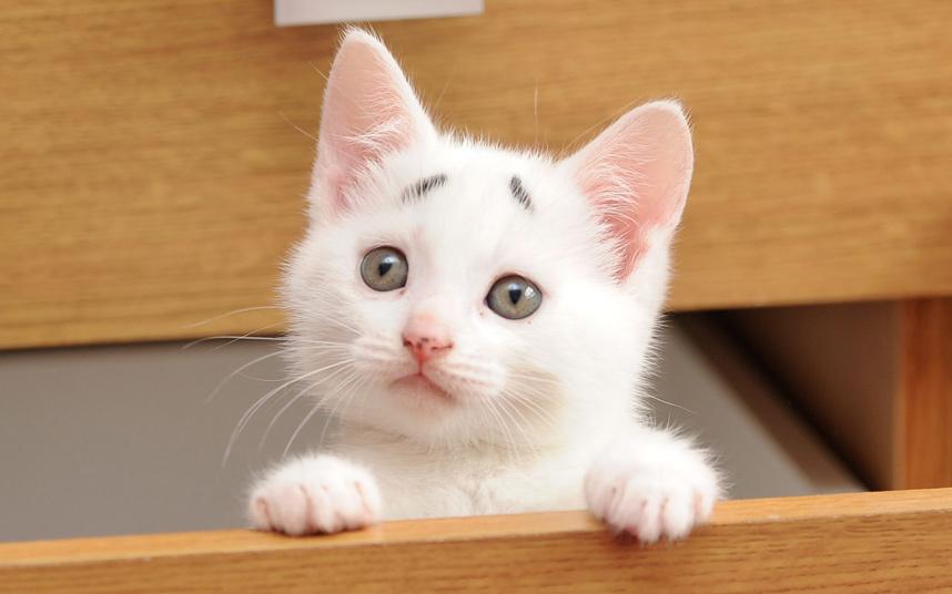 8-недельный котенок