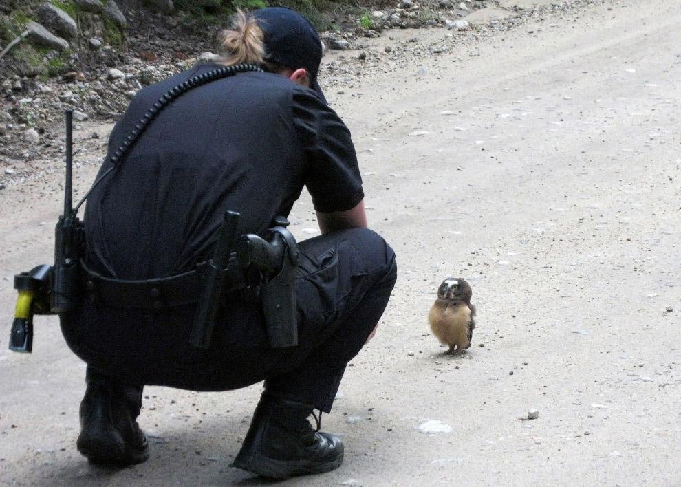 Полицейская и маленькая сова на дороге в Колорадо