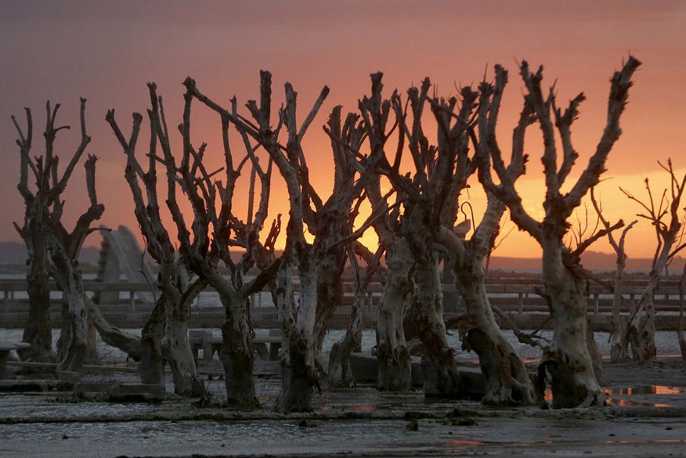 Восставшие из воды мертвые деревья