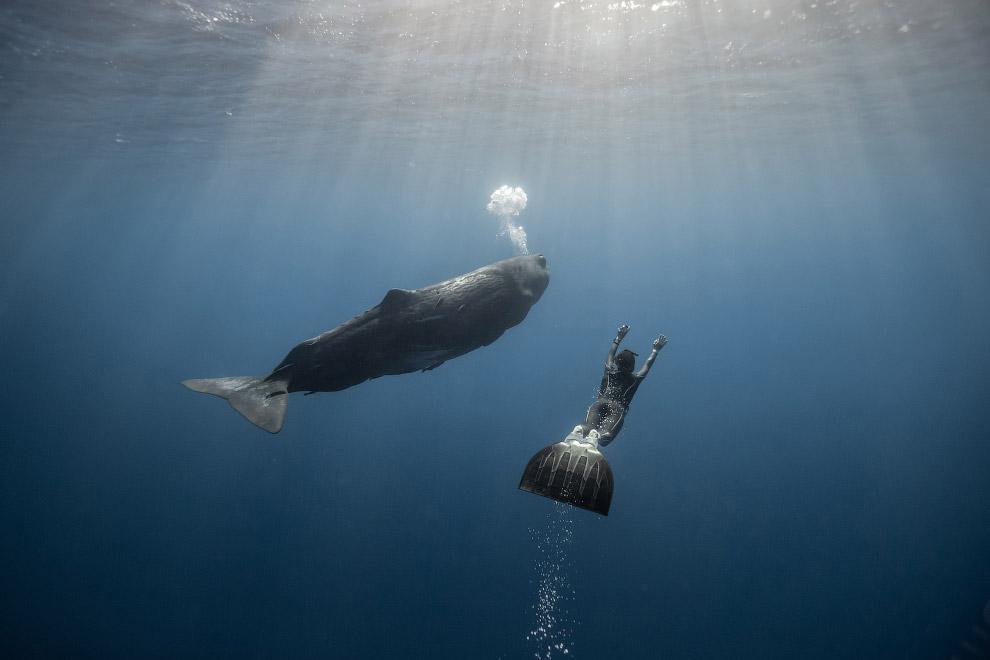 Заплыв с кашалотом