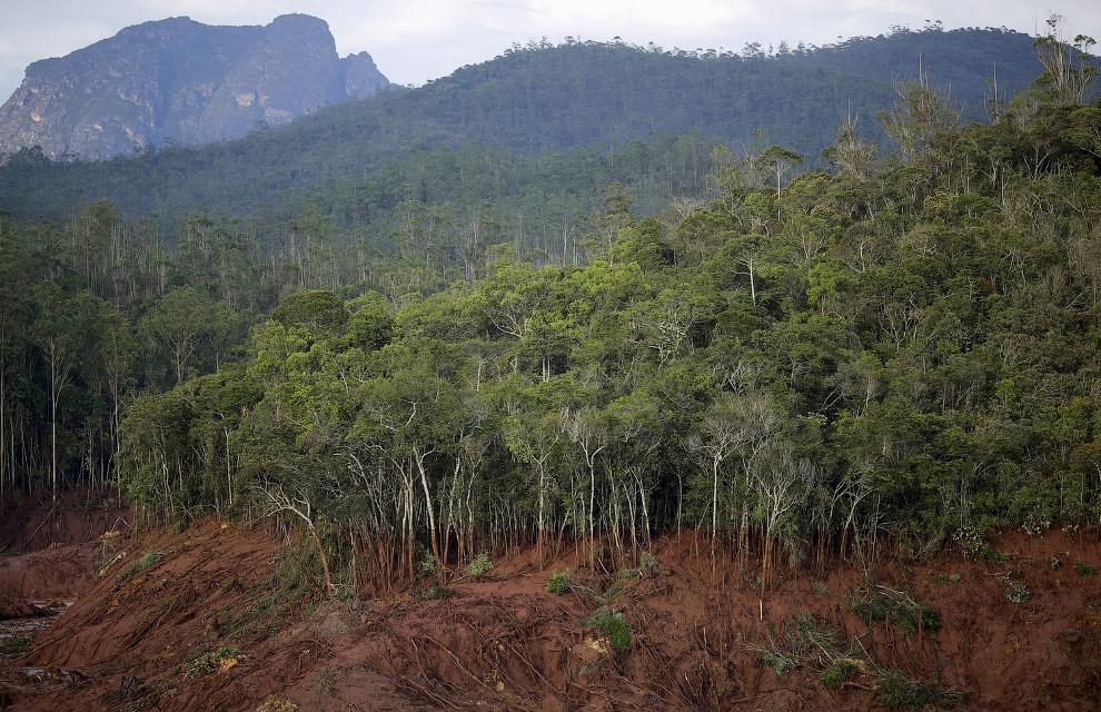 Поваленные деревья, Бразилия