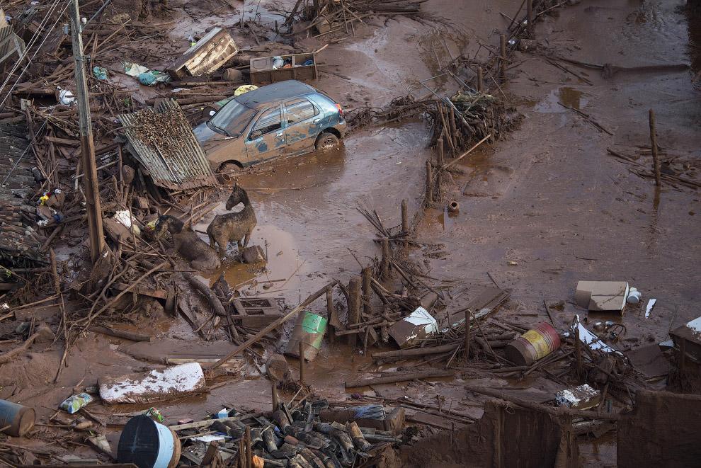 Лошади пытаются выбраться из грязи в уничтоженном селении Бенту Родригес