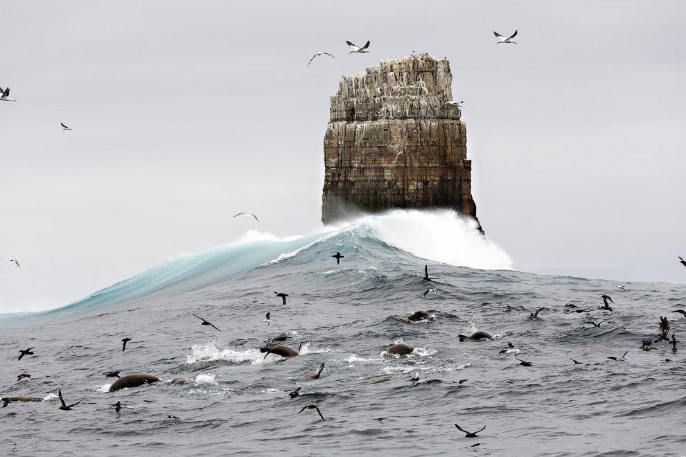 Морская жизнь в юго-западных районах Капской провинции, Австралия