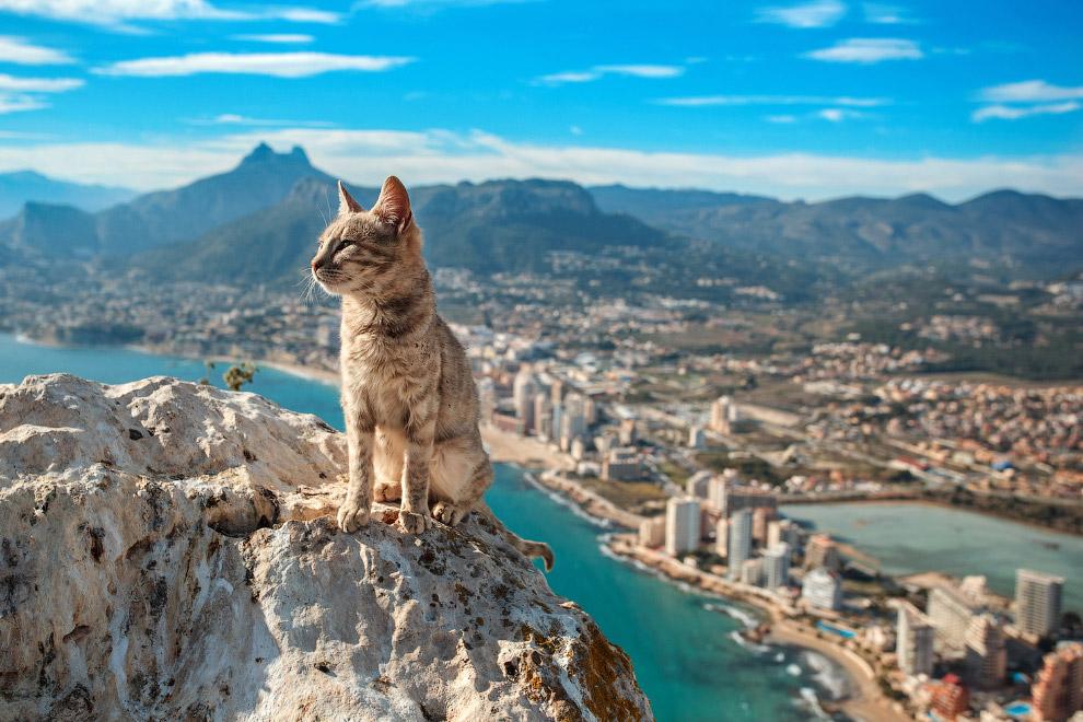 Кот в испанском городе Кальпе