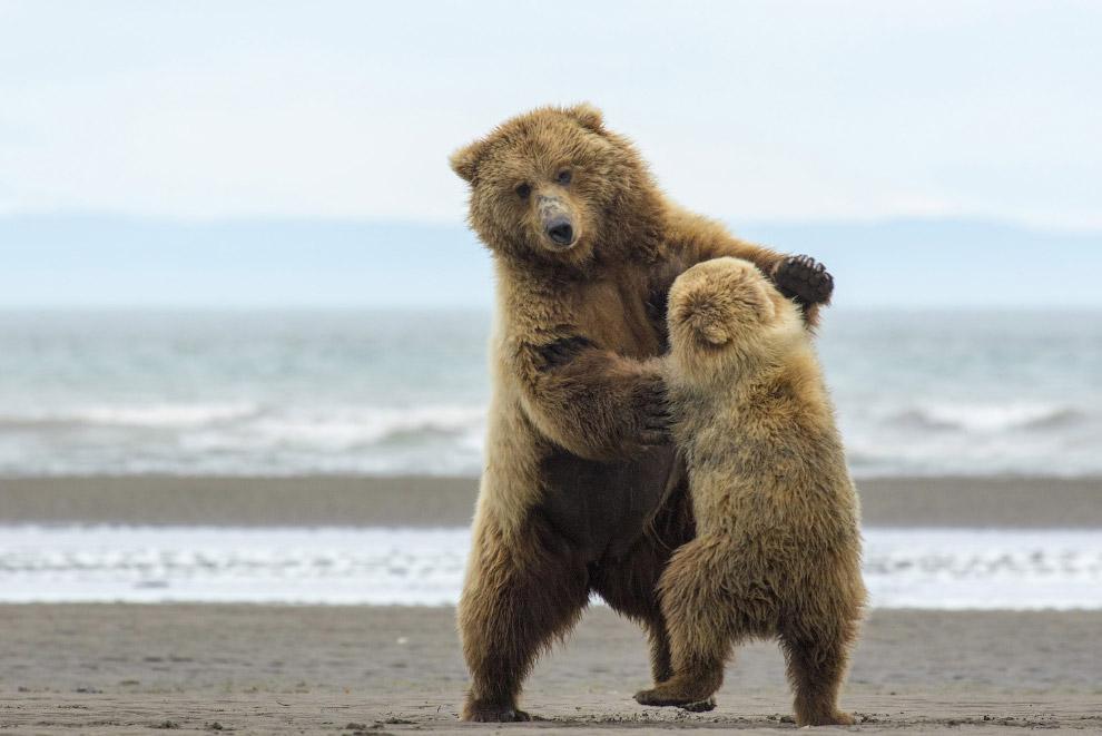 Обучение танцам, Аляска