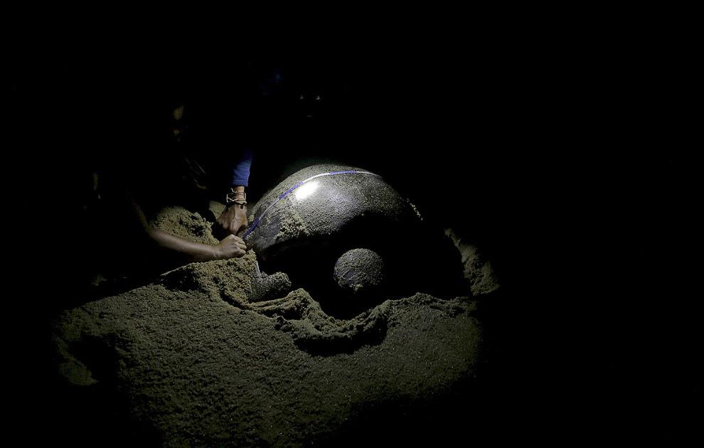 Ученые проверяют черепаху