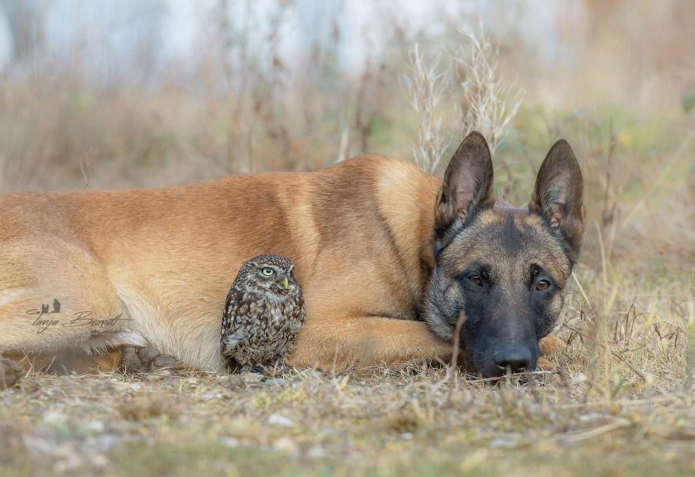 Собака и сова
